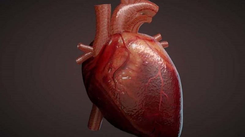 ویژگیها و وظایف متخصص قلب و عروق